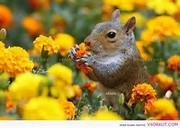 squirrel-2 3
